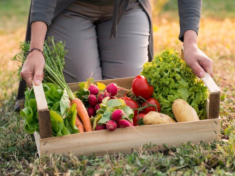Organic là tiêu chuẩn nông nghiệp sạch tự nhiên của các nước phương Tây